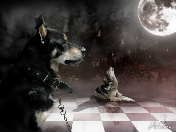 Почему собаки воят на луну